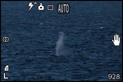 Foto di balena