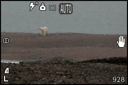 Picture of a polar bear