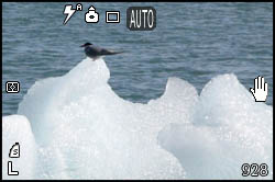 Picture of tern